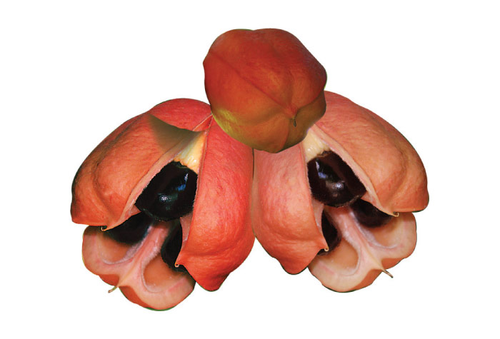 Ackee fruit example